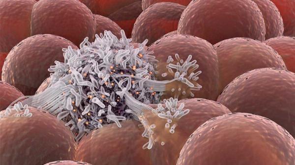 سلول های سرطانی برای جلوگیری از تغذیه و رشد قرنطینه می شوند ، از کنترل دمای داخل خودرو ها تا تشخیص بیماری با تلفن های هوشمند